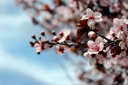 beautiful flowering tree against the bright blue sky Stock Photo - 13003174