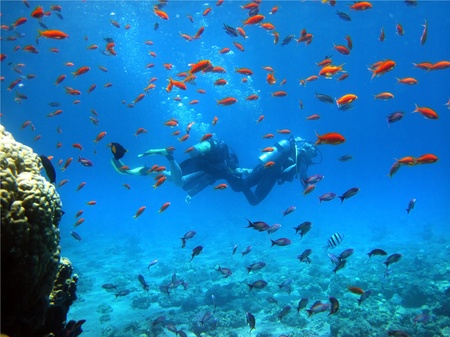 two  floating divers among coral fish in the Red Sea