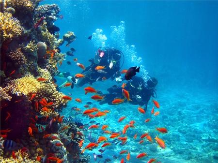 dos buzos flotantes inspección de coral en el Mar Rojo Foto de archivo