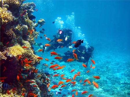 two floating divers inspecting coral in the Red Sea