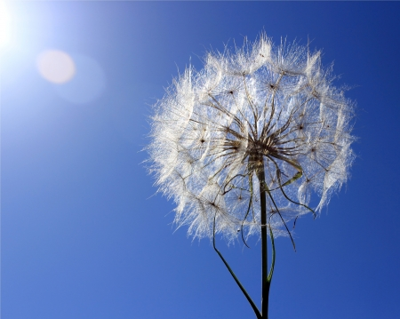 Dandelion on a background a bright blue sky