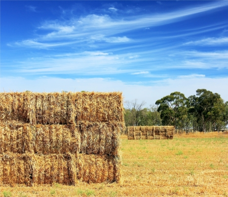 mown hay harvested in large briquettes on the field against a blue sky with clouds Stock Photo - 13883227