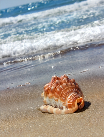 large shell lying on the beach against the waves and the sparkling sea Stock Photo - 14046499