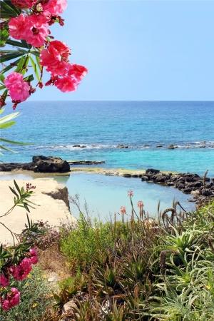 beautiful view on the marine lagoon and red oleander flowers , Mediterranean Sea
