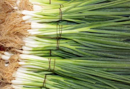 bunches of green onions as an agricultural background Stock Photo - 14459458