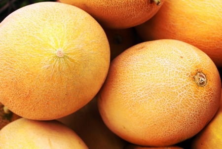 yellow melon as an agricultural background Stock Photo - 14459456