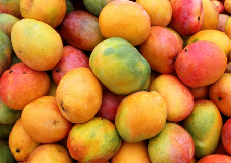 mango leaves: ripe mango fruit as agricultural background