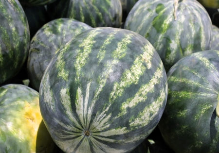 striped watermelons as an agricultural background photo