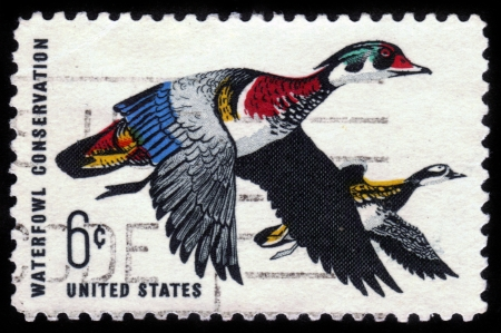 UNITED STATES - CIRCA 1968: stamp printed by United States of America, shows flying wood ducks, an inscription Waterfowl Conservation, circa 1968 Stock Photo - 14565455