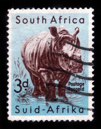 canceled: White Rhinoceros Stock Photo