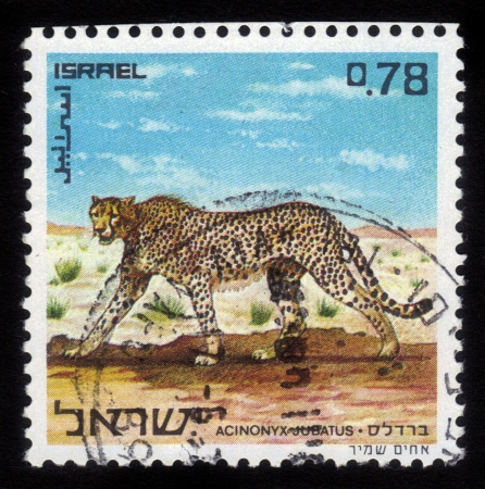 ISRAEL - CIRCA 1971  A stamp printed in Israel, shows image of a cheetah, the world s fastest land animal, circa 1971 photo