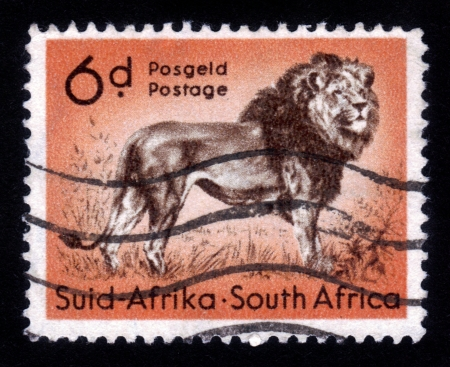 SOUTH AFRICA - CIRCA 1958  A stamp printed in South Africa shows standing lion, circa 1958 Stock Photo - 14794649