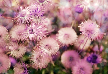 beautiful wild flowers as floral background Stock Photo - 14898402