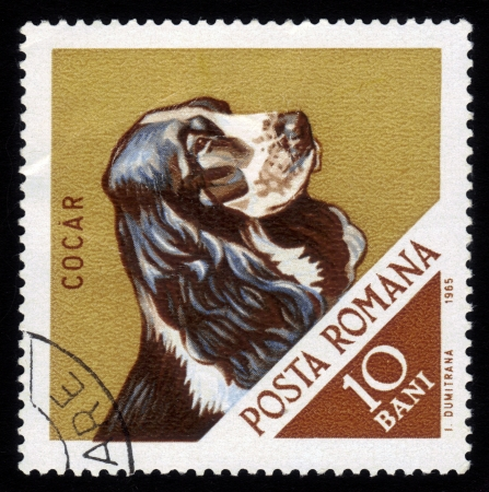 "ROMANIA - CIRCA 1965: A stamp printed in Romania shows a hunting dog with the inscription ""Cocker Spaniel"" from the series"