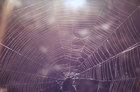 aranha: fundo abstrato com teia de aranha