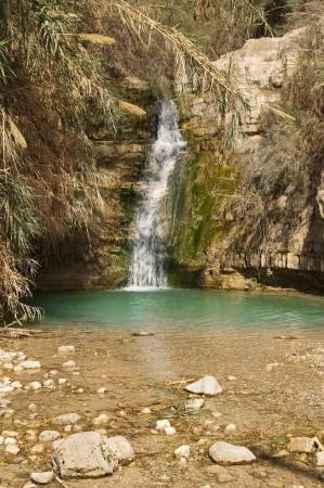 Falls and mineral water in national park Ein Gedi near the Dead Sea in Israel photo