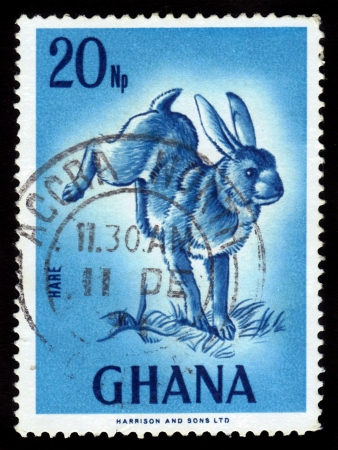 GHANA - CIRCA 1967: A stamp printed in Ghana shows image of the hare , circa 1967 Stock Photo - 16007419