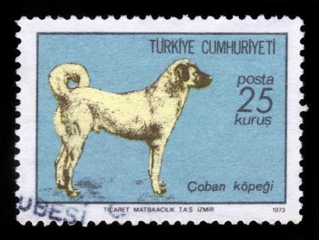 shephard: TURCHIA - CIRCA 1973: Un timbro stampato in Turchia Mostre cane Kangal sheepdog, Sivas turche, circa 1973