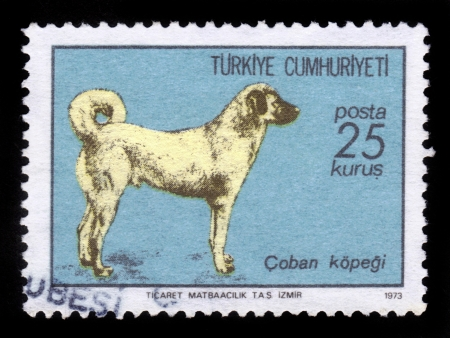 kangal: TURKEY - CIRCA 1973: A stamp printed in Turkey shows sheepdog, Turkish Sivas Kangal Dog , circa 1973 Stock Photo