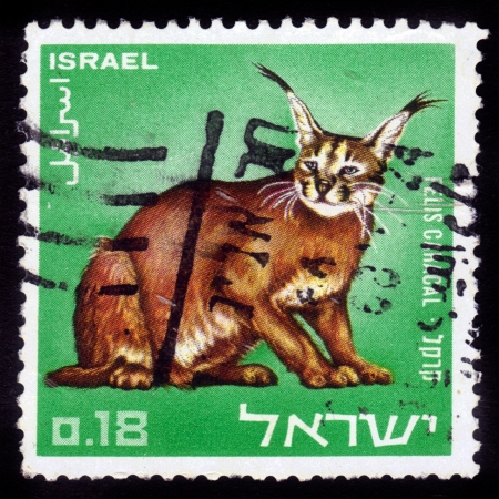 Israel - CIRCA 1976: A stamp printed in Israel  shows Caracal lynx, circa 1976 Stock Photo - 16007407