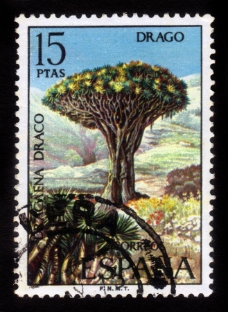 SPAIN - CIRCA 1973: stamp printed by Spain, shows Dragon Tree, Dracaena draco , circa 1973 Stock Photo - 16126222