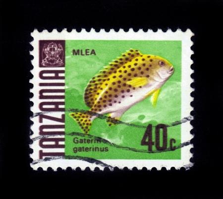 dwell: TANZANIA - CIRCA 1967  A stamp printed in Tanzania showing mlea-fish , gaterin gaterinus , fish dwell off the coast of Tanzania, circa 1967 Stock Photo
