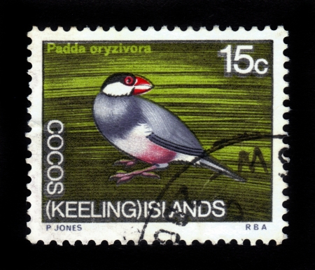 Cocos  keeling  islands- CIRCA 1973  A stamp printed in Australia shows  Java Sparrow   padda oryzivora   , circa 1973 Stock Photo - 16126265
