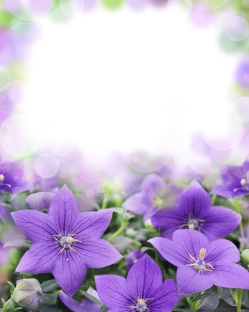 Beautiful bluebells on blurred background as the theme for Valentine s Day Stock Photo - 16126392