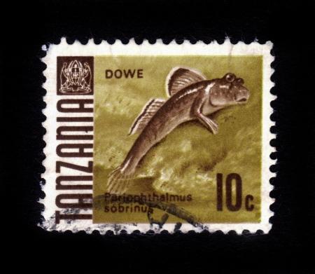 dwell: TANZANIA - CIRCA 1967  A stamp printed in Tanzania showing african mudskipper, periophthalmus sobrinus , fish dwell off the coast of Tanzania, circa 1967