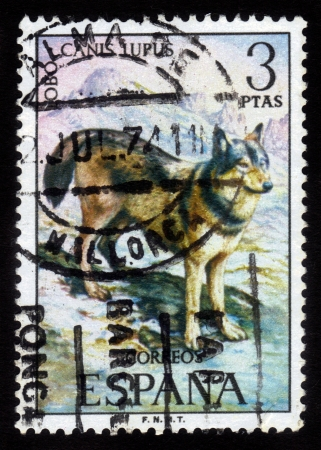 eurasian wolf: Spain - CIRCA 1974: a stamp printed by Spain shows grey wolf (Canis lupus), series Wild Animals, circa 1974