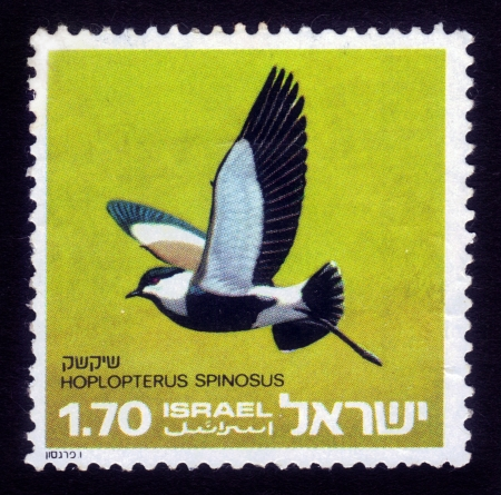 ISRAEL - CIRCA 1975  stamp printed in the Israel  from series Birds of Israel showing color image of bird the Spur-winged Lapwing or Spur-winged Plover ; hoplopterus spinosus , series, circa 1975 Stock Photo - 16233039