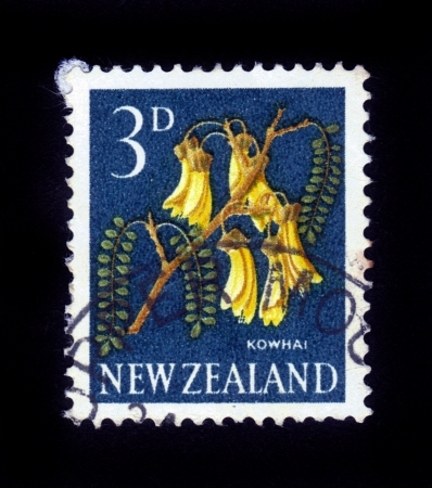 NEW ZEALAND - CIRCA 1964  A stamp printed in New Zealand show kowhai tree, which is endemic to New Zealand, series, circa 1964 Stock Photo - 16233032
