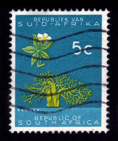 suid: SOUTH AFRICA - CIRCA 1961  A stamp printed in the South Africa shows Baobab tree  Adansonia digitata , circa 1961 Editorial