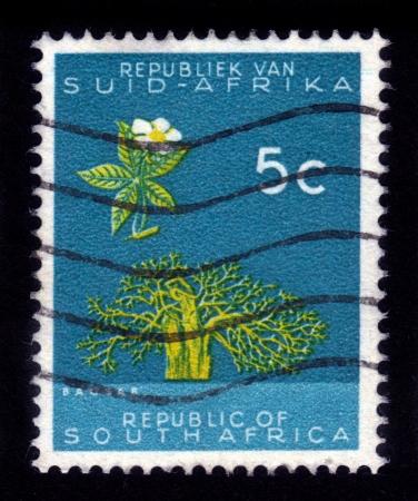 SOUTH AFRICA - CIRCA 1961  A stamp printed in the South Africa shows Baobab tree  Adansonia digitata , circa 1961 Editorial