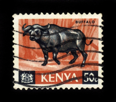 KENYA - CIRCA 1964  A stamp printed in Kenya showing buffalo, circa 1964 Stock Photo - 16348379