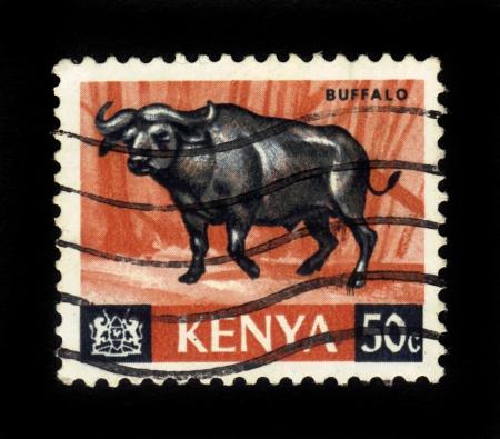 KENYA - CIRCA 1964  A stamp printed in Kenya showing buffalo, circa 1964 Stock Photo - 16348379