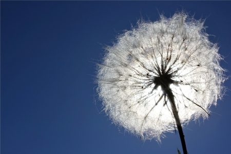 Dandelion is ready to fly on a background a bright blue sky Stock Photo - 16451524