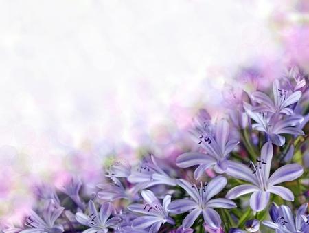 violet bluebells on blurred background