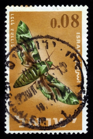 ISRAEL - CIRCA 1965  An used Israeli postage stamp showing colorful butterfly with inscription   Oleander Hawk-moth ,Daphnis nerii  ; series, circa 1965 Stock Photo - 16585888