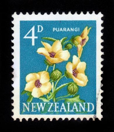 NEW ZEALAND - CIRCA 1960  A stamp printed in New Zealand shows New Zealand hibiscus, Puarangi, circa 1960 Stock Photo - 16878614