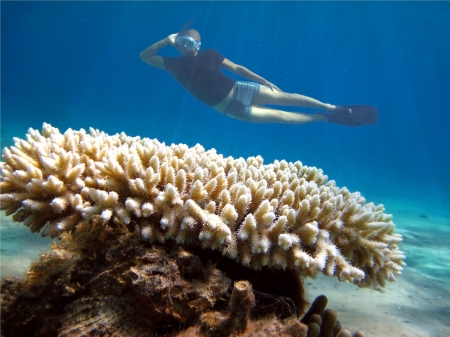 young diver poses on the background of coral in the Red Sea Stock Photo - 16972132