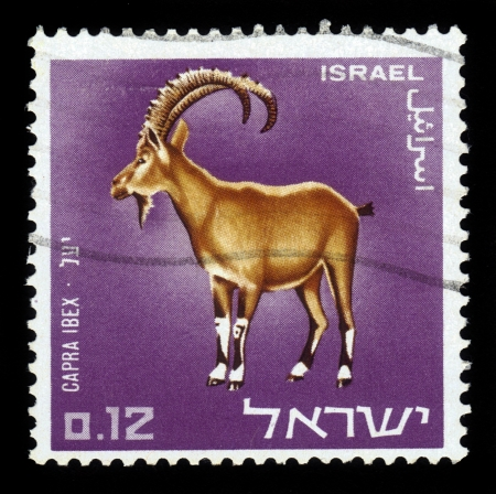 Israel - CIRCA 1966  A stamp printed in the Israel shows  Capra Ibex, circa 1966 Stock Photo - 17113114