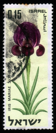 ISRAEL-CIRCA 1970: A post stamp printed in Israel shows flowers of Israel , iris mariae, circa 1970 photo