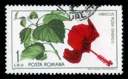ROMANIA - CIRCA 1965: stamp printed by Romania, show Hibiscus, rosa sinensis , circa 1965. Stock Photo - 17181692