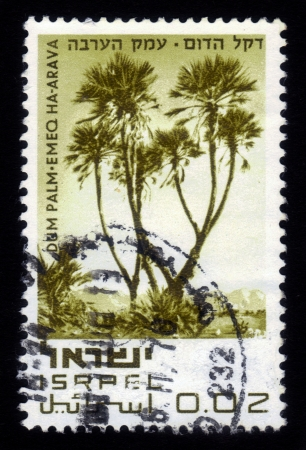 nature reserves of israel: ISRAEL - CIRCA 1970  A stamp printed in Israel, shows Dum Palm - Emeq Ha-Arava, series  Nature Reserves of Israel  ; series, circa 1970