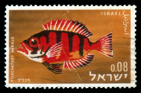 ISRAEL - CIRCA 1963: A stamp printed in Israel, shows specie of the multicoloured exotic fishes found in the Red sea, Lunar-Tailed Bigeye or Moontail bullseye ( Priacanthus Hamrur ), circa 1963 Stock Photo - 17403126