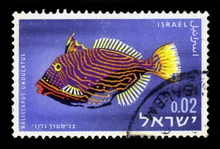 ISRAEL - CIRCA 1963: A stamp printed in Israel, shows specie of the multicoloured exotic fishes found in the Red sea, orange-lined triggerfish, orange-striped triggerfish or undulated triggerfish  ( Balistapus Undulatus ), circa 1963 Stock Photo - 17403127