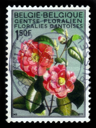 Belgium - CIRCA 1970  a stamp printed in Belgium shows flower Japanese Camellia  Camellia japonica , Ghent Internetional flower exhibition, circa, 1970 Stock Photo - 17403143