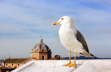 image of seagull on the background of dome of the cathedral in Rome. Italy. Stock Photo - 17757969