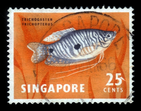 SINGAPORE - CIRCA 1962: A stamp printed in Singapore shows a the three spot gourami, trichopodus trichopterus, circa 1962. Stock Photo - 18222653